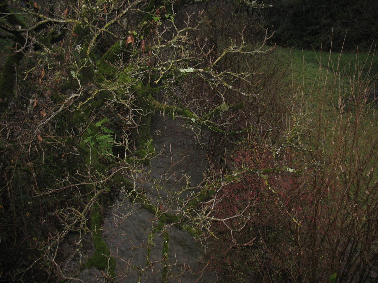 Le ruisseau du PLANET LE 29/11/2014