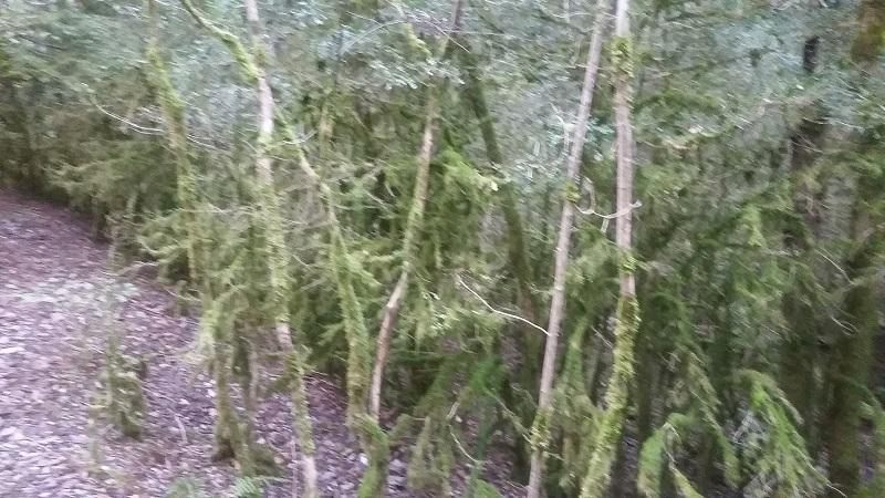 La forêt d'Halloween ;)