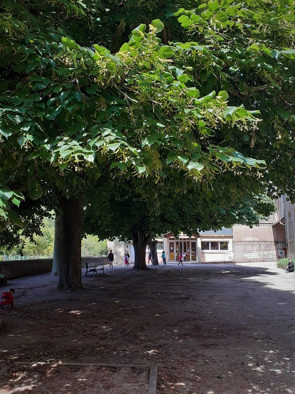 Cours de l'école des Tilleuls