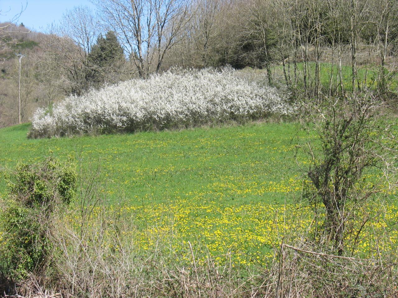 Un bosquet fleuri