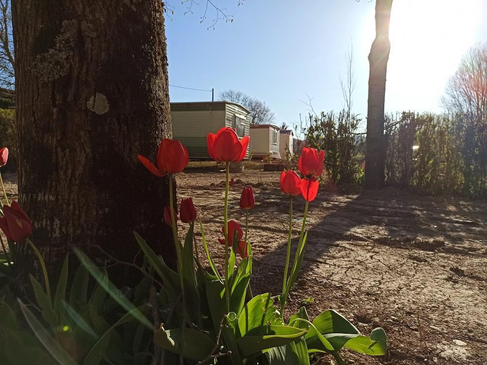 Camping de La Nuejouls FAYET