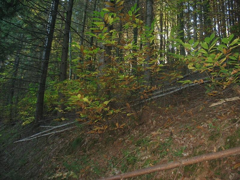 Chemin de randonnées sur la commune de FAYET